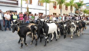 Cattle Fair and Pilgrimage